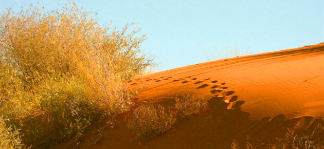 KALAHARI RED DUNE ROUTE