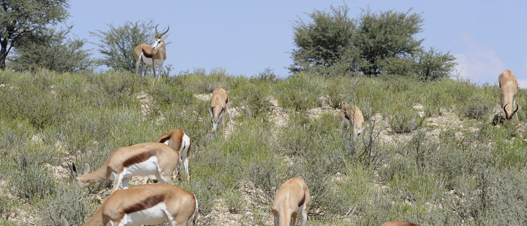 Northern Cape - Green Kalahari